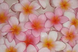 ハワイ花1