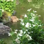 関西・夏至の神々の社を訪ねて 2
